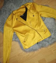Nova oker jaknica