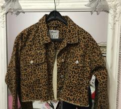 Nova teksas jaknica