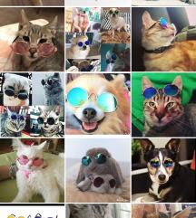 Naočare za kućne ljubimce!