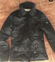 Maslinasta zimska jaknica