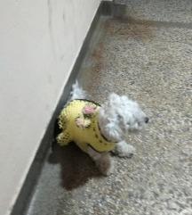 Џемпери за псе