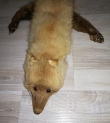 Lisica okovratnik