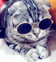 Naočare za kućnog ljubimca, macu, malu kucu NOVO