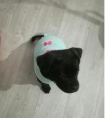 Topla bluzica za psa po vašim merama
