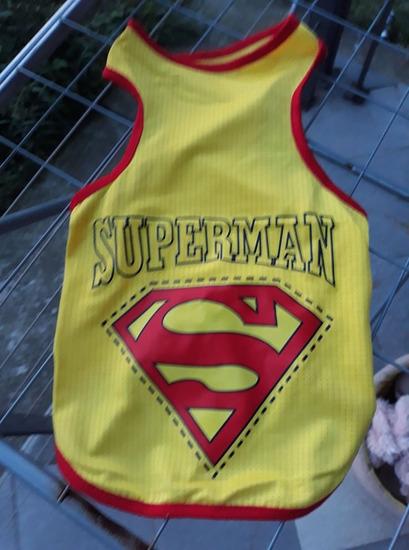 SUPERMAN za pse