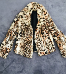 Leopard bundica 🐆