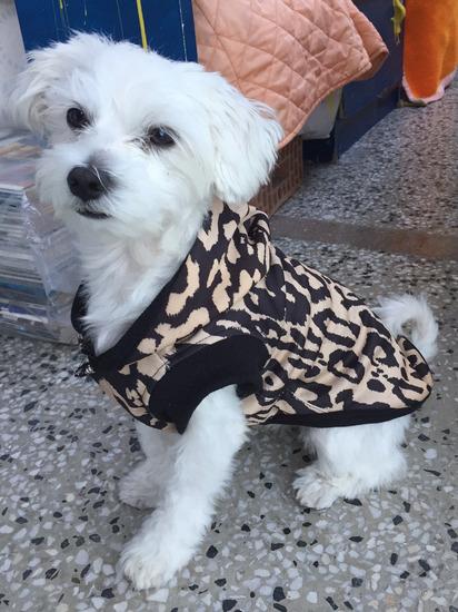 Duks za pse ~ Animal print 🐆 NOVO