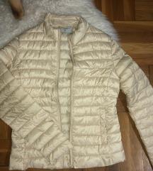Caliope prolecna jaknica