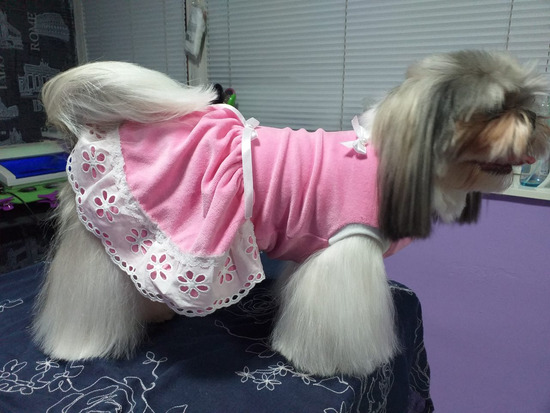 Gaćice i haljina za pse